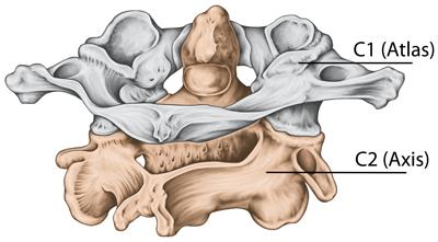 Anatomi bevegelsesapparatet