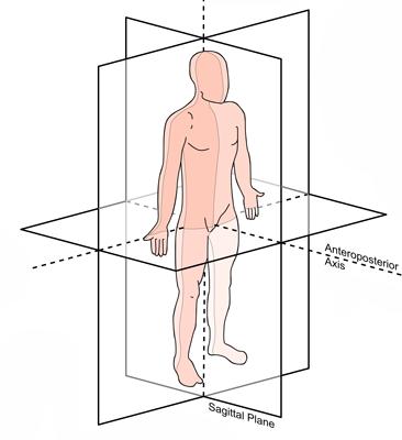 Anatomi Plan og Retninger