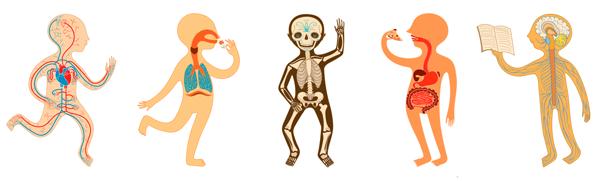 Anatomi quizer oversikt
