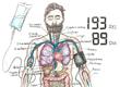 Anatomi Paramedisin