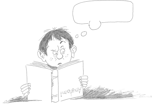 Hvordan lese anatomi