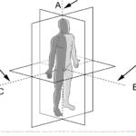 Plan og retninger anatomi