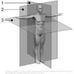 Anatomi Plan og rettninger