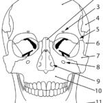 Hodeskallen frontal