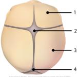 Barnets skalleoverflate