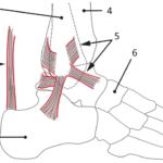 Fotens leddbånd